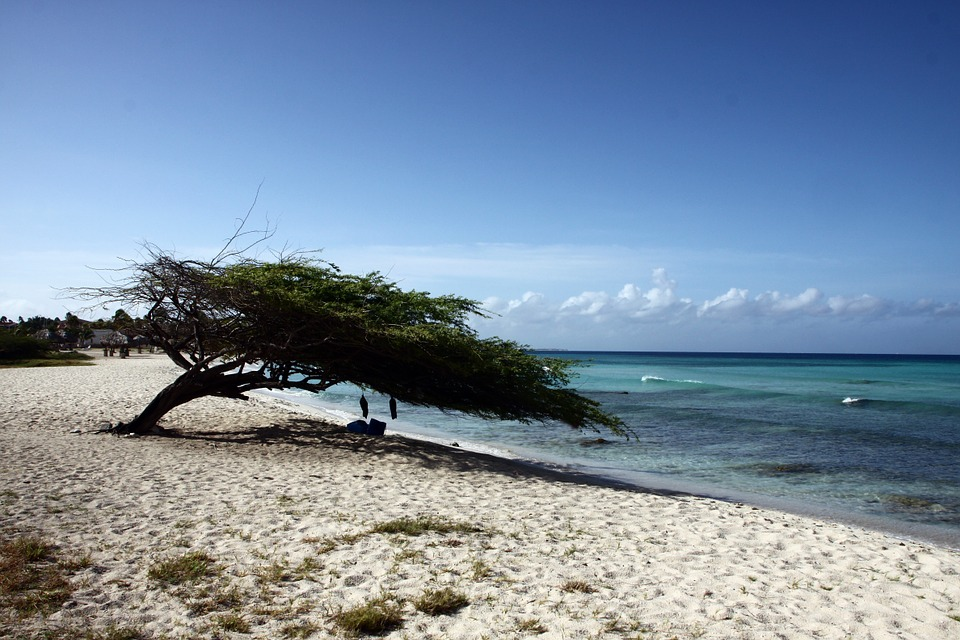 A Shade Tree on a Beach in Aruba