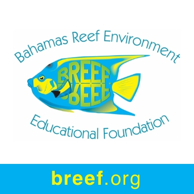 Bahamas Reef Environment Educational Foundation